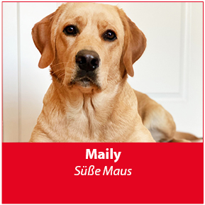 Maily